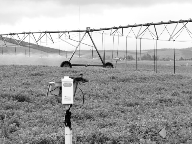 On the left side of the irrigation apparatus in Stan Ashbrook's Dufur field, mid-elevation sprayers hang above the alfalfa crop they irrigate. At right above, it is difficult to see the spray from the low-elevation spray applicators because application is at crop level, providing greater efficiency. In center foreground, a sensor monitors ground water.