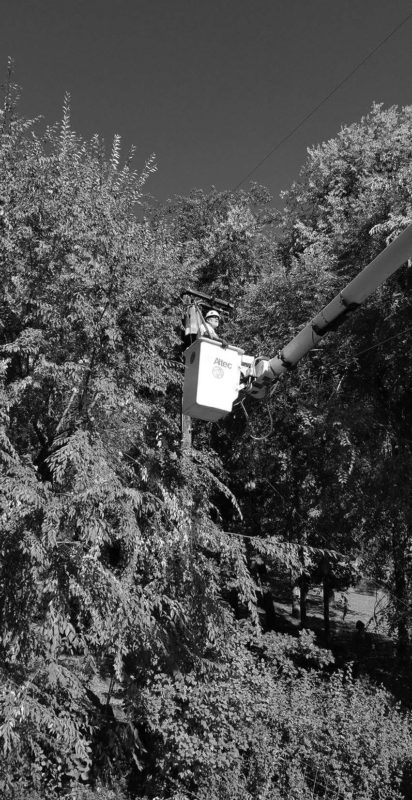 worker in bucket lift trimming a tree