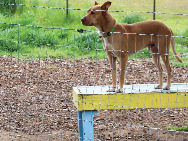 A dog residing at Home at Last Humane Society enjoys some outdoor time at the play yard.
