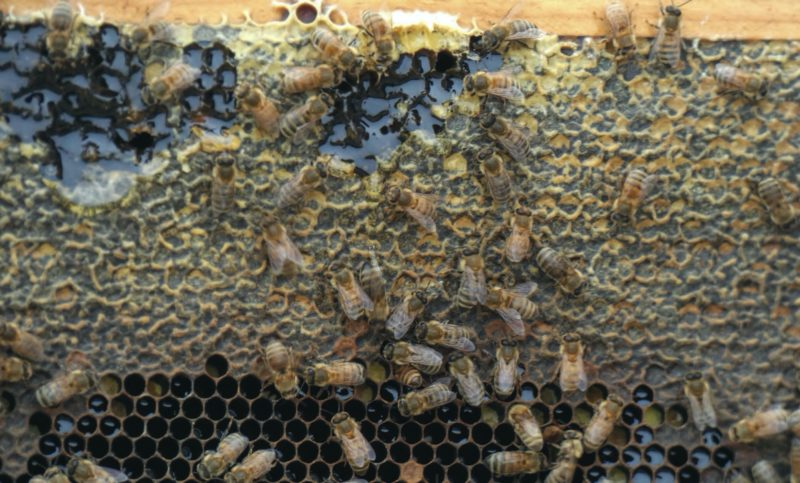 bees standing on top of honeycomb
